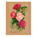 Rosas rosados florales del vintage lindo tarjeta postal