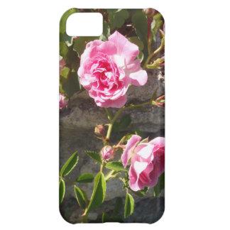 Rosas rosados