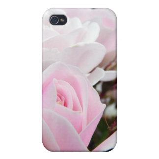 Rosas rosados iPhone 4 protectores