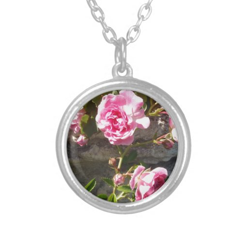 Rosas rosados grímpola