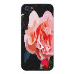 Rosas rosados iPhone 5 protectores