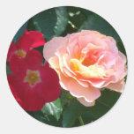 Rosas rosados rojos coralinos 1 etiquetas redondas