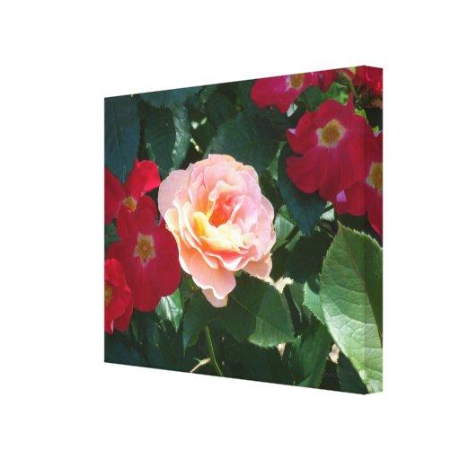 Rosas rosados rojos coralinos 1 impresión de lienzo