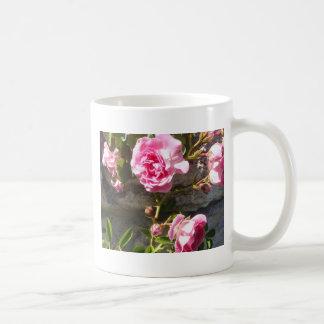 Rosas rosados taza de café