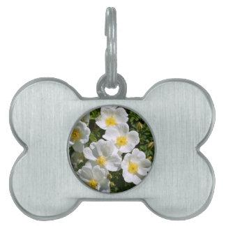 Rosas salvajes blancos placa de nombre de mascota