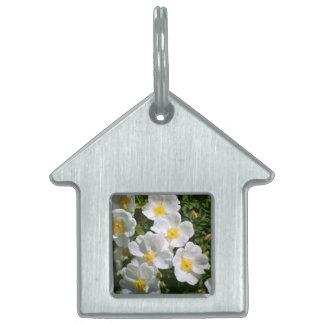 Rosas salvajes blancos placas mascota