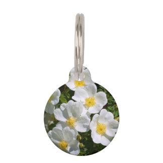 Rosas salvajes blancos placa de mascota