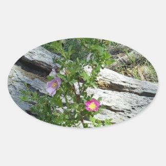 Rosas salvajes calcomanías óvales
