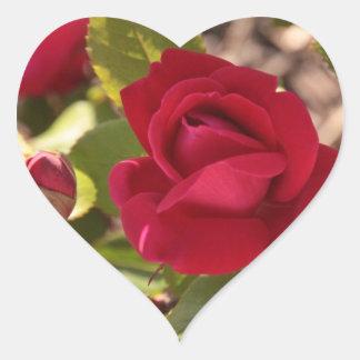 Rosas y corazones calcomanías corazones