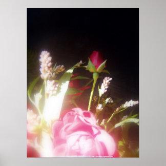 rosas y wildflowers 8 posters