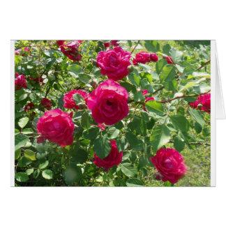 Rose4You Card