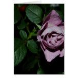 Rose-03 Felicitación