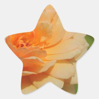 ROSE 12 STAR STICKER