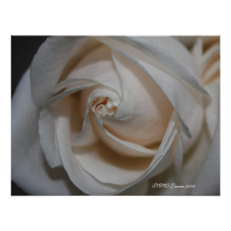Rose 13 poster