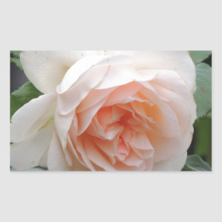 ROSE 4 RECTANGULAR STICKER