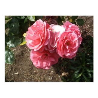 Rose #5 postcard