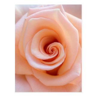 rose-851950.jpg postcard