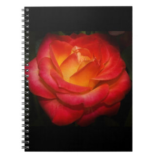 Rose Aflame Notebook