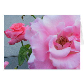 Rose All Occasion Note Card