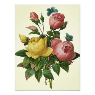 Rose and Butterfly Bouquet Poster