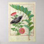 Rose and Polygonatum Poster