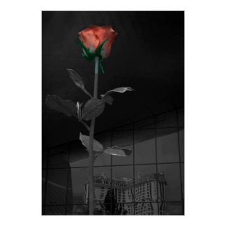 Rose and Reflection, Las Vegas Poster