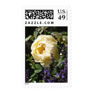 Rose and Salvia Postage Stamp
