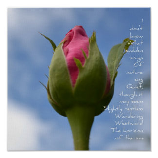 Rose and Sky Poem  Poster
