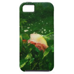 Rose and water spray iPhone 5 covers