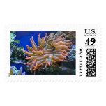 Rose Anemone Postage Stamp