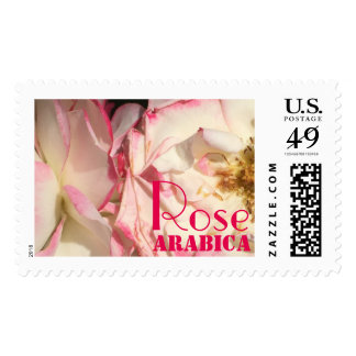 Rose Arabica pink fragrant petals of the orient Postage
