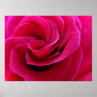Rose art print Pink Roses Spiral Floral artwork