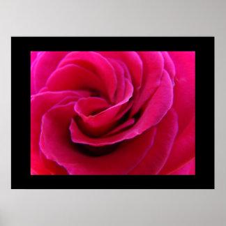 Rose art prints Summer Floral Rose Spiral artwork Poster