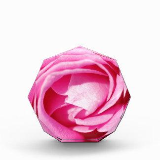 Rose Award