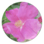 Rose Beach Plum Pink Dinner Plates