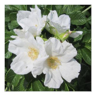 Rose Beach Plum White Card