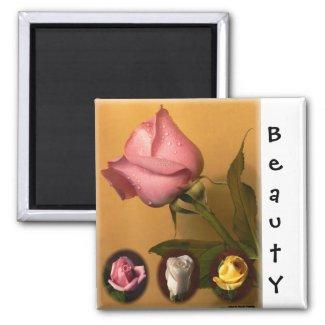 Rose - Beauty -Magnet magnet