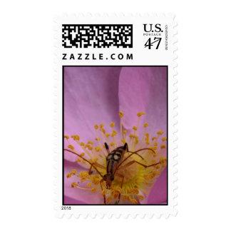 Rose Beetle Stamp