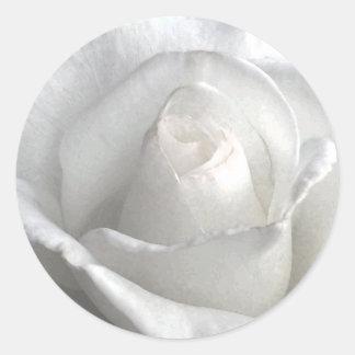 Rose_ blanco pegatina redonda