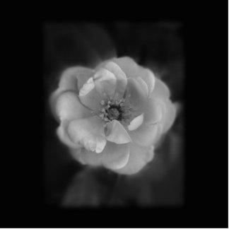 Rose blanco y negro llavero fotográfico