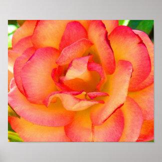 Rose Bliss Poster
