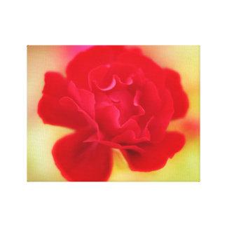 Rose bloom canvas print