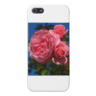 Rose Bloom iPhone 5 Cases