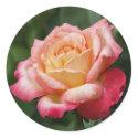 Rose Bloom Sticker sticker