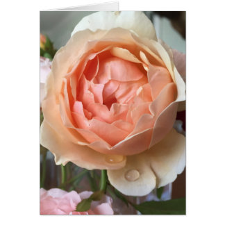 Rose blossom card