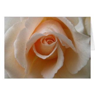 Rose Blossom Close Up Note Cards