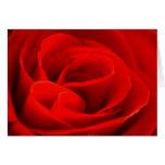 Rose Blossom Greeting Card
