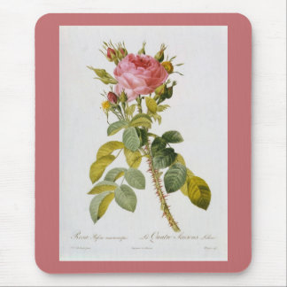 Rose Botanical Rosa Bifera by  Redoute Mouse Pad