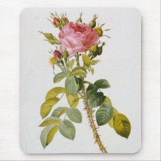 Rose Botanical Rosa Bifera by  Redoute Mouse Pad