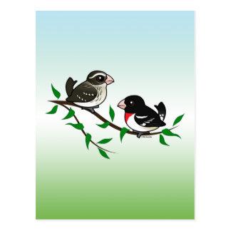 Rose-breasted Grosbeak Couple Postcard